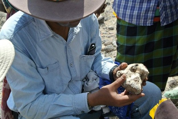 A rare skull of 3.8 million years throws new clues about how humans evolved (3)