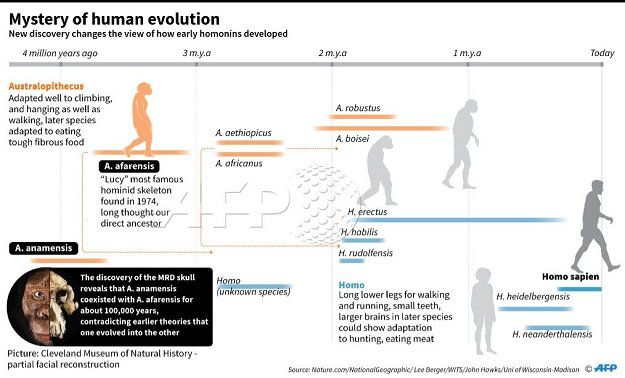 A rare skull of 3.8 million years throws new clues about how humans evolved (6)